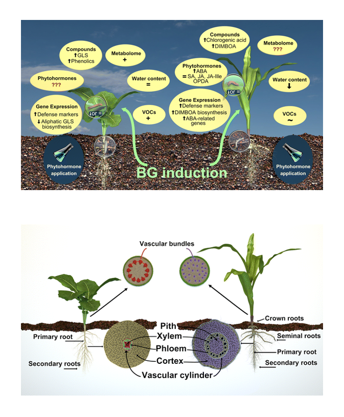 research paper on plants Soil research learn about soil 2018 — because of the very low nitrate levels found in arctic tundra soil, scientists had assumed that plants in this.